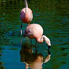 Flamingo Reflections by Jinx13
