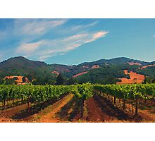 California Vineyard Photographic Print