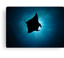Manta Silhouette-flying past the sun at noon Canvas Print