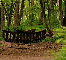 Bridge in the Woods by mtphotography