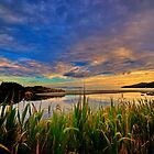 Captain Cook Creek Reeds HDR - Bruny Island, Tasmania, Australia by PC1134