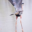 Ballet Dancer - Heron by Yannik Hay