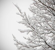 Winter Storm Number....... Umm...... by Becky Trudell