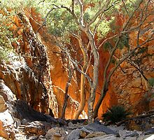 Standley Chasm by John Vriesekolk