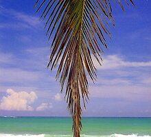 Shady Palm, Puerto Rico  by Alberto  DeJesus