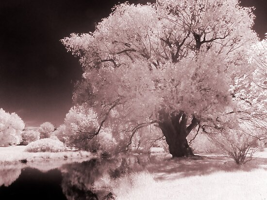 Infra-Red Springtime in Ottawa, No. 3 by Max Buchheit