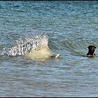 The Dog, the Dolphin and the Fish by Vicki73