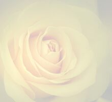 Soft wedding rose by walstraasart