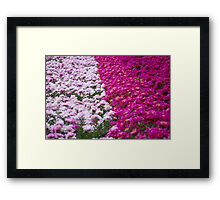 An Ocean Full of Peonies Framed Print
