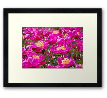 An Ocean Full of Peonies II Framed Print