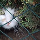 Peeking Through The Fence by vbk70