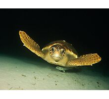 Hawksbill Turtle and Remora, Nassau, Bahamas Photographic Print