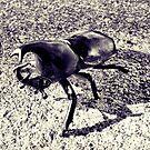 Beetle by mjds
