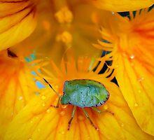 Stink-Bug by Ann  Palframan