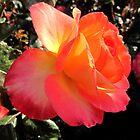 A Perfect Rose by Jennifer  Gaillard