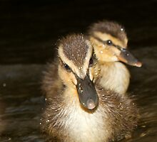Wild Duckling Siblings by A.M. Ruttle
