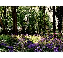 I found my bluebells! Photographic Print