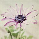 ...delicado... by Astrid Ewing Photography