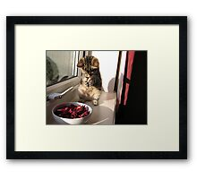 Don't think I can eat this... Framed Print