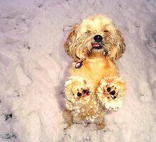 Enjoying the snow by Megaaan