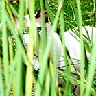 Through the Tall Grass by DionNelson