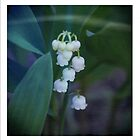 Lily of the Valley by ©Maria Medeiros