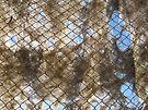 Ghost Net by John Douglas