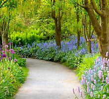 Springtime Floral Walk... by Carol Clifford