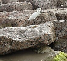Bird on the rock  by Windy Rodriguez