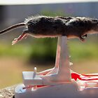Planking mouse! by Vanessa Sartor
