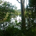 View of Shoalhaven River by dogwalker