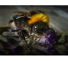 Just Bumble (2) Photographic Print