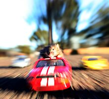 Car surfing mouse! by Vanessa Sartor