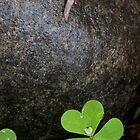 Clovers and Little Slug by Adam Bykowski