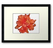 Orange Hibiscus - Close-Up Framed Print