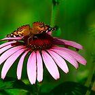 Butterfly Dreams by Brenda Burnett