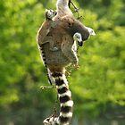 lemur by tallulahminky