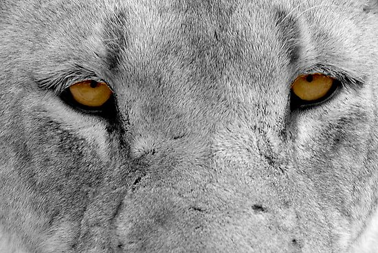 Eyes by Michael  Moss
