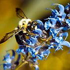 Bee Blue by Athenawp