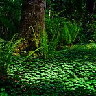 Carpet of Clover - Bainbridge Island, WA by Mark Heller