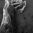 Drift Wood by Narani Henson