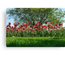 A Tree Among Tulips  Canvas Print