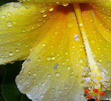 Drenched by a tropical storm by ?? B. Randi Bailey