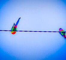 Birds on a Wire by Ian  Wollstein