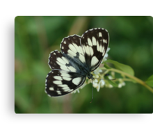 Marbled White Canvas Print