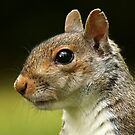 Squirrel Portrait by Mark Hughes