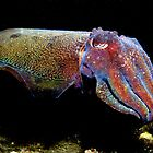 Colours of a Cuttle. by yook