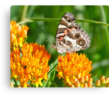 """Butterfly with """"The Look"""" Canvas Print"""
