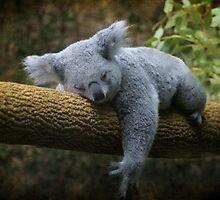 Back to Sleep by Tamara  Kaylor