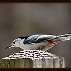 """The Nuthatch"" by Gail Jones"